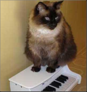Cat on a Schoenhut Toy Piano
